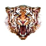 Painted portrait of grin tiger face on white background. Sketch portrait of grin tiger face on white background royalty free stock photos