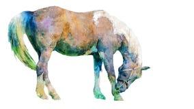 Painted portrait portrait of a standing horse