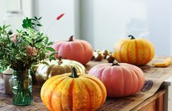 Painted pumpkins in the creative workshop Stock Photo