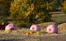 Painted pumpkins stock images. Cute piggy pumpkin. Halloween pumpkin decoration in the garden. Three fairy pigs stock photo