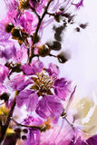 Painted purple flowers watercolor style , Lagerstroemia Stock Photos
