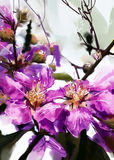 Painted purple flowers watercolor style , Lagerstroemia Stock Image