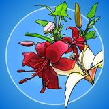 Painted red and white lilies on a blue background. Painted red and white lilies on blue background Royalty Free Stock Image