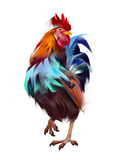 Painted rooster on a white background Stock Image