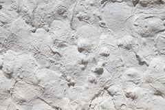 Painted rough plaster. Stock Photography