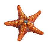 Painted sea star Royalty Free Stock Photography