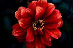 Painted som ser blomman Royaltyfria Bilder