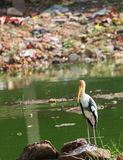 Painted stork against mountain of human garbage in background Royalty Free Stock Photos
