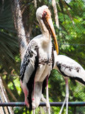 A painted stork bird. In Cage royalty free stock photo