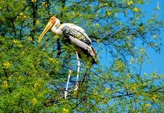 Painted stork bird. Sitting on a tree Stock Image