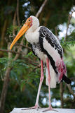 Painted stork resting Royalty Free Stock Photos