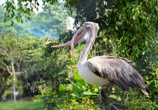 Painted stork on tree Royalty Free Stock Images