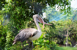 Painted stork on tree Stock Photos
