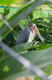 Painted stork in zoo Royalty Free Stock Photos