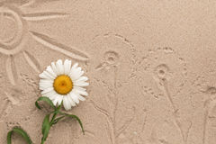 Painted sun and camomile prints on the sand. Beautiful picture. Stock Image