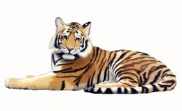 Painted Tiger. Resting in a imaginary jungle Stock Photography