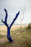 Painted Tree on the beach Royalty Free Stock Image