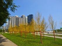 Painted Trees in Butler Field, Chicago Stock Photo