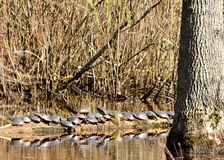 Painted Turtles Stock Photo