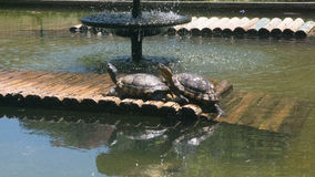 Painted Turtles taking sun Stock Images