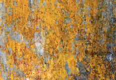 Painted warm yellow surface Stock Photography