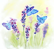 Painted watercolor card with summer lavender. Flowers and butterflies Stock Photography