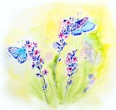Painted watercolor card with summer lavender. Flowers and butterflies Royalty Free Stock Photos