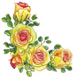 Painted with watercolor corner with bright roses and leaves of e Stock Images