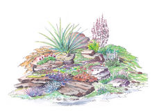 Alpine garden landscaping. Painted by watercolor example garden landscaping alpine slide style Stock Images