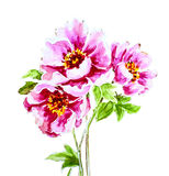 Painted watercolor peony flower Stock Images