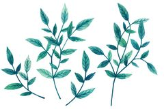 Painted watercolor set of decorative green leaves and branches isolated on white background. Elements for design. Valentine`s Day. Mother`s Day, Wedding vector illustration