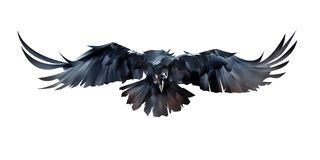 Painted on white background flying bird raven in front stock illustration