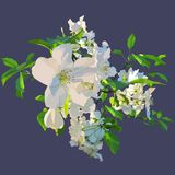 Painted white flowers of a blossoming apple tree. Painted white flowers of blossoming apple tree Stock Photo