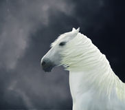 Painted white horse Royalty Free Stock Photography