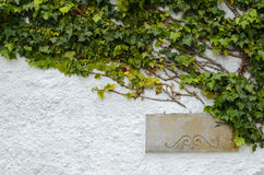 Painted white wall partly covered with green ivy and with metal plate Stock Photo