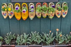 Painted Wooden Dutch Clog Shoes Decorating the Side of a Building with budding Tulips royalty free stock photo