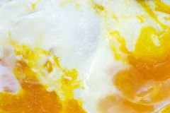 Painter's eggs Royalty Free Stock Image