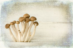 Painterly mushrooms Stock Photo