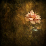 Painterly Rose Still Life Background Royalty Free Stock Photo