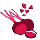Painterly Satz des Vektors rote Rüben, Rote-Bete-Wurzeln, rohes und Schnitt vektor abbildung