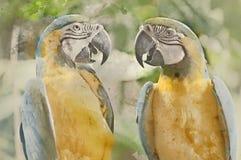 Painterly umgewandeltes Bild von zwei blau u. von gelben Papageien stockfotos