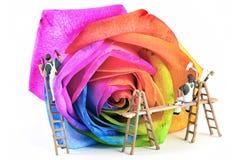 Painters rose. Miniature painters color multicolor rose Stock Image