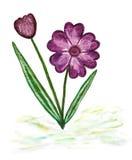 Paintig de la acuarela de la flor floreciente simple Imágenes de archivo libres de regalías