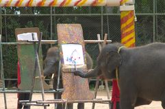 Painting. Elephants stock images