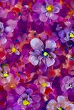 Flowers pansy, violet texture oil painting. Abstract hand-painted flowers background. Painting abstract mix colorful pansy flowers background. vertical seamless Stock Photos