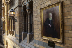 Painting of Alfred Russel Wallace at the Natural History Museum Stock Photography