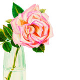 Painting art watercolor flower colorful of rose in glass Stock Image
