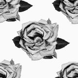 Painting art watercolor flower illustration gray color of rose Royalty Free Stock Image