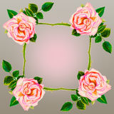 Painting art watercolor flower illustration pink color of rose Royalty Free Stock Image