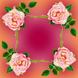 Painting art watercolor flower illustration pink color of rose Royalty Free Stock Photography